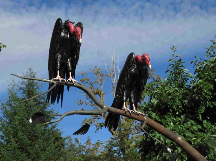Buzzards sculpture