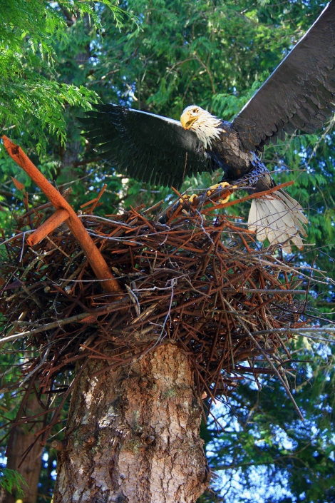 Life-sized eagle in nest