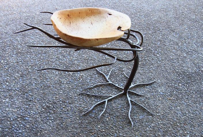 Windswept tree with burl bowl nest